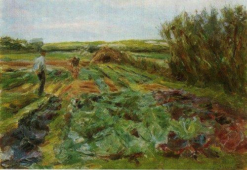Капустное поле