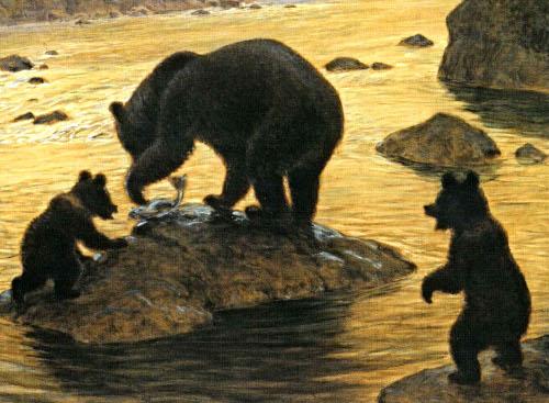 Медведь за рыбной ловлей